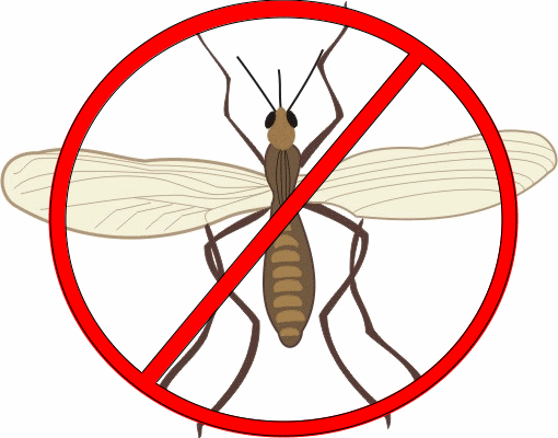 30 ways to get rid of gnats inside and outside the house - Gnats In Kitchen