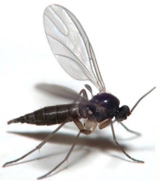 Get Rid Of Gnats Inside And Outside